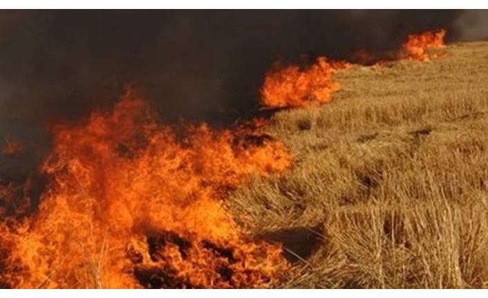 55 dönüm anız cayır cayır yandı