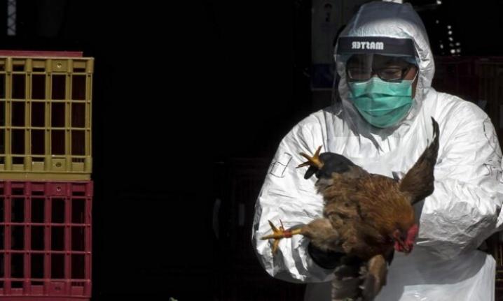 Çin'de Bir Kişide Kuş Gribine Rastlandı