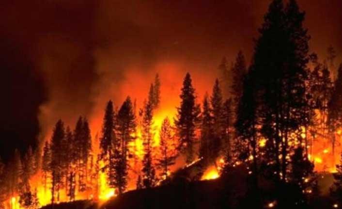 """""""Orman Yangınlarına"""" İlişkin Meclis Araştırma Komitesi Raporu"""