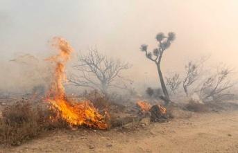 Dilekkaya'da Meydana Gelen Yangında, 20 Çam Ve 20 Akasya Ağacı Tamamen Yandı