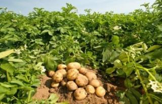 Türkiye'de patates ve soğan ihracatı için...