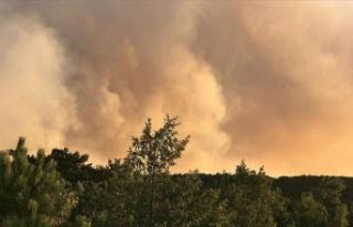 ABD'de yıldırım düşmesi sonucu orman yangını...