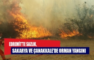 Edremit'te sazlık, Sakarya ve Çanakkale'de...