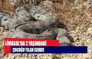 Limasol'da 2 yaşındaki çocuğu yılan soktu