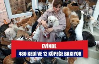 Evinde 480 kedi ve 12 köpeğe bakıyor