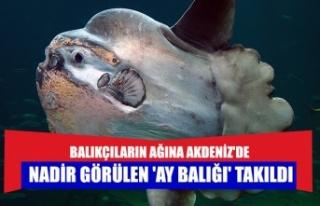 Balıkçıların ağına Akdeniz'de nadir görülen...