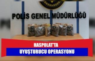 Haspolat'ta uyuşturucu operasyonu