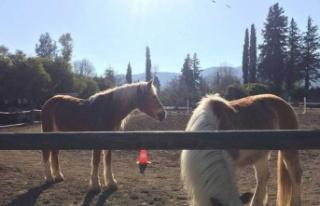 Kalkanlı'da At Çiftliği'nde Darp… 2 Kişi...
