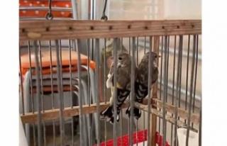 Doğadan alıkoyduğu kuşları satmaya çalıştı!