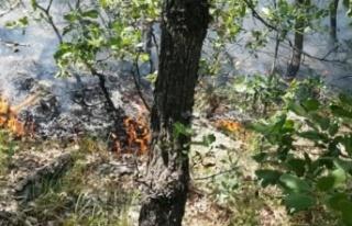 Elazığ'daki orman yangını 5 gündür sürüyor