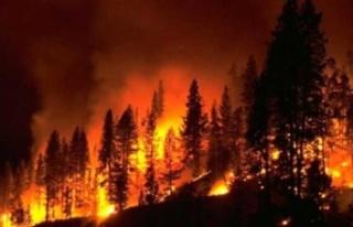 """""""Orman Yangınlarına"""" İlişkin Meclis Araştırma..."""