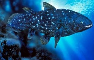 Yeni keşif: 'Yaşayan fosil' balık 100 yıl...