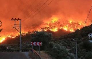 Milas'ta ormanlık alanda çıkan yangın kontrol...