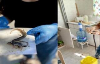 Fare yapışkanları doğal yaşamı tehdit ediyor!