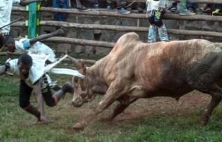 Madagaskar'da dehşet! Sığır hırsızları ve...