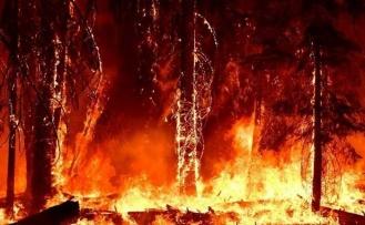 Kaliforniya'da orman yangınları sürüyor!