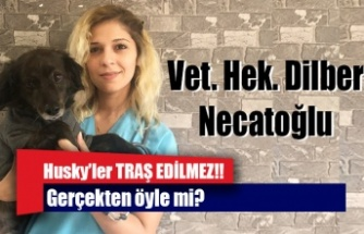 Husky'ler TRAŞ EDİLMEZ!!