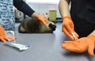 Zorunlu hale getirilmişti; evcil hayvanlara mikroçip takılmaya başlandı
