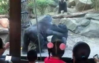 ABD'deki bir hayvanat bahçesinde yaşanan olay panik yaşattı