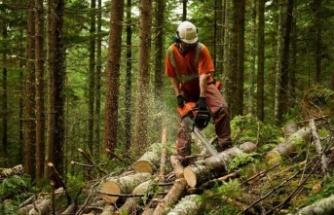 Araştırma: Her üç ağaçtan biri yok olma tehlikesiyle karşı karşıya, hangi ağaçlar tehlikede?