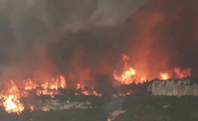 Suriye'de orman yangını çıkarmakla suçlanan 24 kişi idam edildi